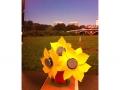 16-sunflowers